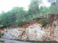 nella pineta del Monte Inici - 11 ottobre 2009  - Castellammare del golfo (1547 clic)