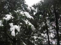 neve sul monte Bonifato - Riserva Naturale Orientata Bosco d'Alcamo - 15 febbraio 2009               - Alcamo (1817 clic)