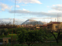 Monte Bonifato innevato - 14 febbraio 2009   - Alcamo (2350 clic)