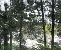 neve sul monte Bonifato - Riserva Naturale Orientata Bosco d'Alcamo - 15 febbraio 2009               - Alcamo (1880 clic)