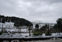 neve sul monte Bonifato - 15 febbraio 2009   - Alcamo (2560 clic)