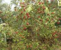 Cala Mazzo di Sciacca - azzalora - 29 novembre 2009  - Castellammare del golfo (2096 clic)