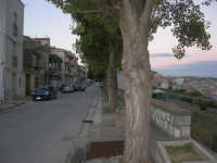 viale alberato - 9 ottobre 2007   - Vita (4157 clic)