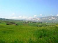 la campagna a primavera - 3 maggio 2009   - Buseto palizzolo (1490 clic)