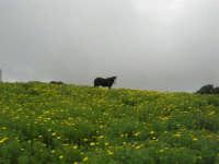 sul monte Erice - panorama . . . con foschia - 1 maggio 2009  - Erice (1743 clic)
