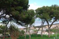Zona Aleccia - 13 febbraio 2009  - Alcamo marina (3210 clic)