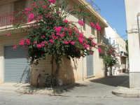 via Duca degli Abruzzi: un angolo in fiore - 23 agosto 2008  - San vito lo capo (593 clic)