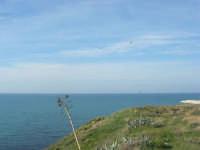 vista sul mare - 15 marzo 2009   - Balestrate (3266 clic)