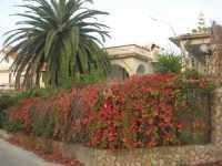 per le vie del paese: i colori dell'autunno - 8 novembre 2009   - Trappeto (3460 clic)