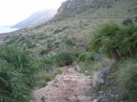 Riserva Naturale Orientata Zingaro - sentiero - 24 febbraio 2008  - Riserva dello zingaro (903 clic)