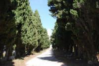 sul colle Pianto Romano il viale alberato (Viale della Rimembranza) che collega l'ossario alla stele  - 4 ottobre 2007   - Calatafimi segesta (1061 clic)