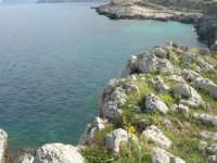 Capo San Vito - la costa rocciosa ed il mare - 10 maggio 2009   - San vito lo capo (1616 clic)