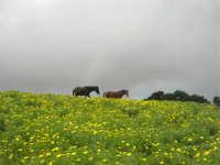 sul monte Erice - panorama . . . con foschia - 1 maggio 2009  - Erice (2012 clic)