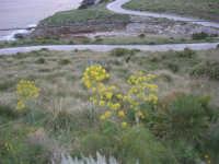 Macari - nei pressi dell'Isulidda - 19 aprile 2009  - San vito lo capo (1855 clic)