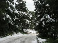 neve sul monte Bonifato - Riserva Naturale Orientata Bosco d'Alcamo - 15 febbraio 2009               - Alcamo (1614 clic)