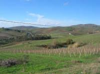 panorama - 14 dicembre 2008   - Segesta (726 clic)