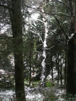 neve sul monte Bonifato - Riserva Naturale Orientata Bosco d'Alcamo - 15 febbraio 2009               - Alcamo (2293 clic)