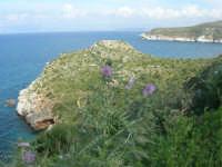Golfo di Castellammare - la costa tra Guidaloca e Castellammare del Golfo - 5 aprile 2009  - Castellammare del golfo (878 clic)