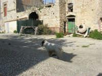 Castello di Baida - cortile interno - 21 febbraio 2009   - Balata di baida (4005 clic)
