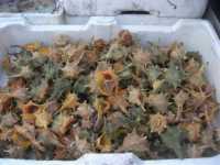 al porto - molluschi - 7 dicembre 2009  - Sciacca (6151 clic)