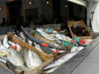 ricci e pesci vari esposti in un ristorante  - 25 aprile 2006   - San vito lo capo (3367 clic)