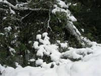 neve sul monte Bonifato - Riserva Naturale Orientata Bosco d'Alcamo - 15 febbraio 2009               - Alcamo (1740 clic)