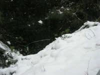 neve sul monte Bonifato - Riserva Naturale Orientata Bosco d'Alcamo - 15 febbraio 2009               - Alcamo (1871 clic)
