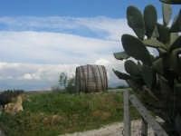campagna alcamese: pianta di ficodindia ed una vecchia grande botte, simbolo del vino prodotto in queste terre - 23 febbraio 2009   - Alcamo (3320 clic)