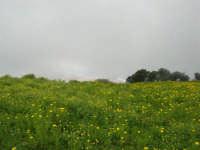 sul monte Erice - panorama . . . con foschia - 1 maggio 2009  - Erice (2183 clic)