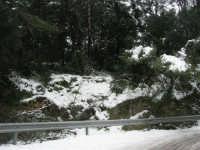 neve sul monte Bonifato - Riserva Naturale Orientata Bosco d'Alcamo - 15 febbraio 2009               - Alcamo (1638 clic)