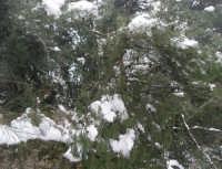 neve sul monte Bonifato - Riserva Naturale Orientata Bosco d'Alcamo - 15 febbraio 2009               - Alcamo (2040 clic)
