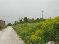strada di campagna - 17 aprile 2006  - San giuseppe jato (4146 clic)