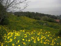panorama - 11 aprile 2009   - Scopello (2371 clic)