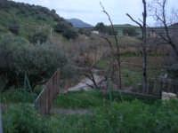 panorama campestre a sera - Fiume Caldo - 8 febbraio 2009   - Calatafimi segesta (2142 clic)