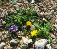 Golfo del Cofano: tra le pietre, delicati fiori - 24 febbraio 2008   - San vito lo capo (936 clic)