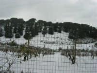 neve sul monte Bonifato - Riserva Naturale Orientata Bosco d'Alcamo - 15 febbraio 2009   - Alcamo (2254 clic)