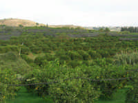 aranceto - 9 novembre 2008   - Ribera (2549 clic)