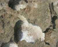 Golfo del Cofano - sale sugli scogli - 27 agosto 2009  - San vito lo capo (3404 clic)