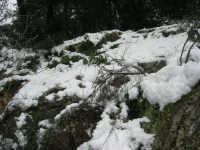 neve sul monte Bonifato - Riserva Naturale Orientata Bosco d'Alcamo - 15 febbraio 2009               - Alcamo (2328 clic)