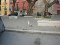 zona porto - 1 maggio 2008  - Trapani (830 clic)