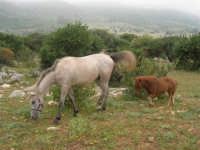 C/da Cucca (sulla strada per San Vito Lo Capo, un paio di chilometri dopo Purgatorio)- Agriturismo La Valle dei Tramonti - 27 maggio 2007   - Custonaci (809 clic)