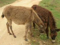 C/da Cucca (sulla strada per San Vito Lo Capo, un paio di chilometri dopo Purgatorio)- Agriturismo La Valle dei Tramonti - 27 maggio 2007   - Custonaci (1167 clic)