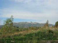 Caltabellotta vista dalla campagna di Ribera - 9 novembre 2008   - Caltabellotta (990 clic)