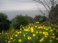 vista sul golfo di Castellammare e torre di avvistamento - 11 aprile 2009   - Scopello (1827 clic)