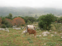 C/da Cucca (sulla strada per San Vito Lo Capo, un paio di chilometri dopo Purgatorio)- Agriturismo La Valle dei Tramonti - 27 maggio 2007   - Custonaci (997 clic)