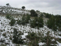 neve sul monte Bonifato - 15 febbraio 2009   - Alcamo (2394 clic)