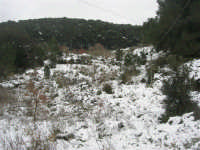 neve sul monte Bonifato - Riserva Naturale Orientata Bosco d'Alcamo - 15 febbraio 2009     - Alcamo (1799 clic)
