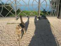 Piazza Petrolo: un simpatico gattino tenta l'approccio - 17 novembre 2009   - Castellammare del golfo (1744 clic)