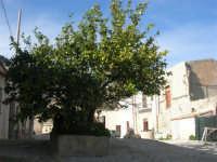 Castello di Baida - cortile interno - albero di limoni - 21 febbraio 2009  - Balata di baida (3054 clic)