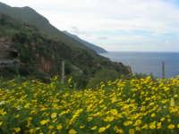 panorama - 19 aprile 2009  - Riserva dello zingaro (2513 clic)